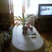 1-комнатная квартира (36м2) в аренду по адресу Славы пр., 2— фото 3 из 5