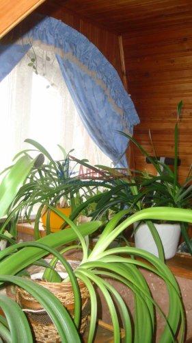 3-комнатная квартира (79м2) на продажу по адресу Новоселье пос., 161— фото 10 из 18