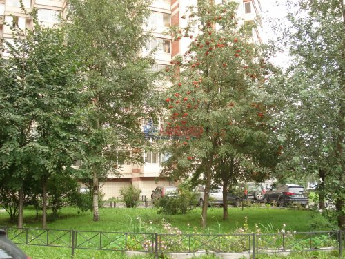 1-комнатная квартира (41м2) на продажу по адресу Савушкина ул., 117— фото 2 из 14