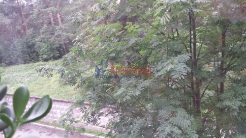 Комната в 4-комнатной квартире (760м2) на продажу по адресу Сестрорецк г., Борисова ул., 9— фото 1 из 9