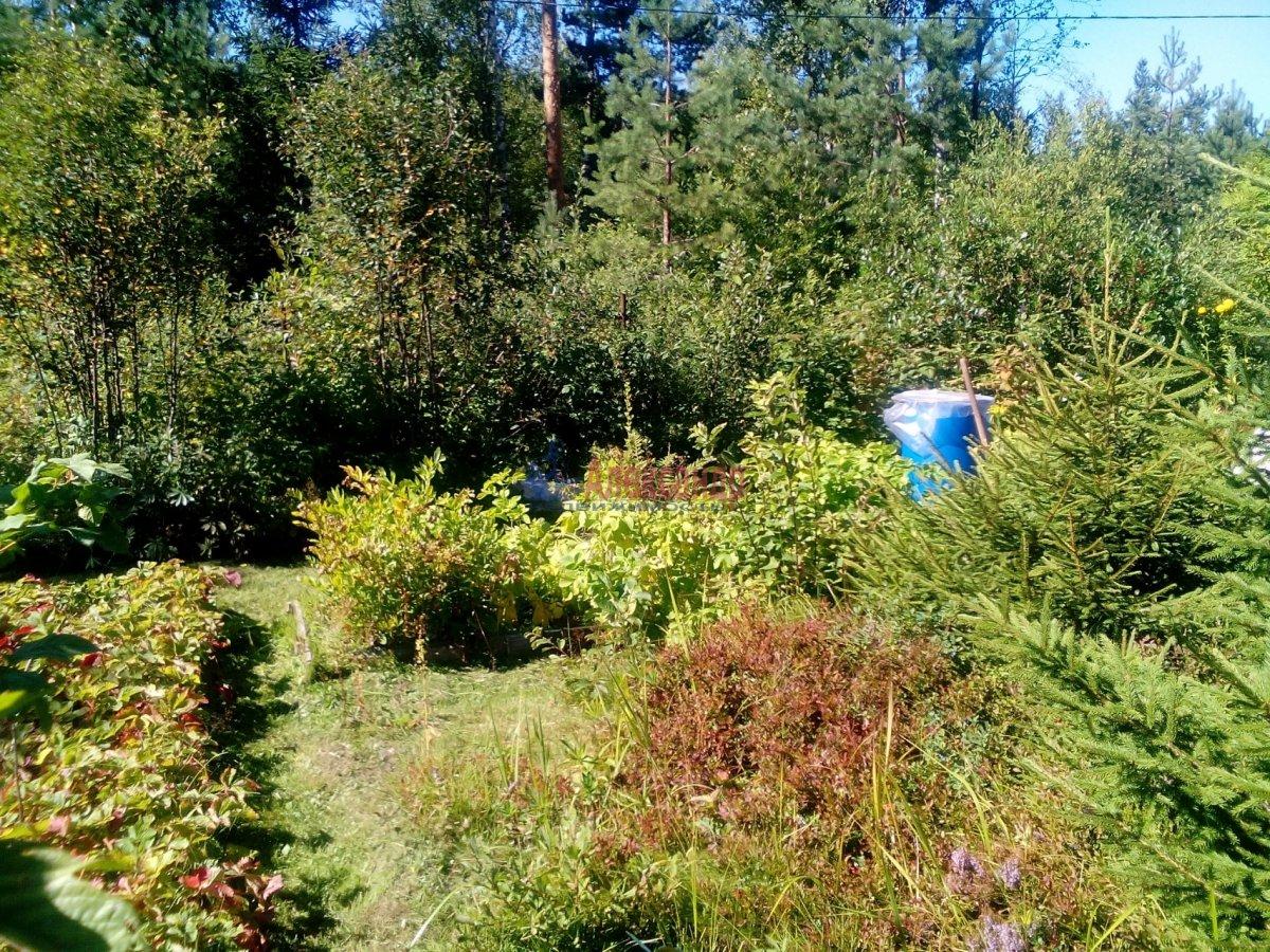 Садовый дом (12м2) на продажу — фото 5 из 25