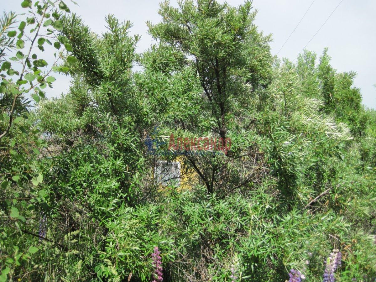 Садовый дом (36м2) на продажу — фото 17 из 40