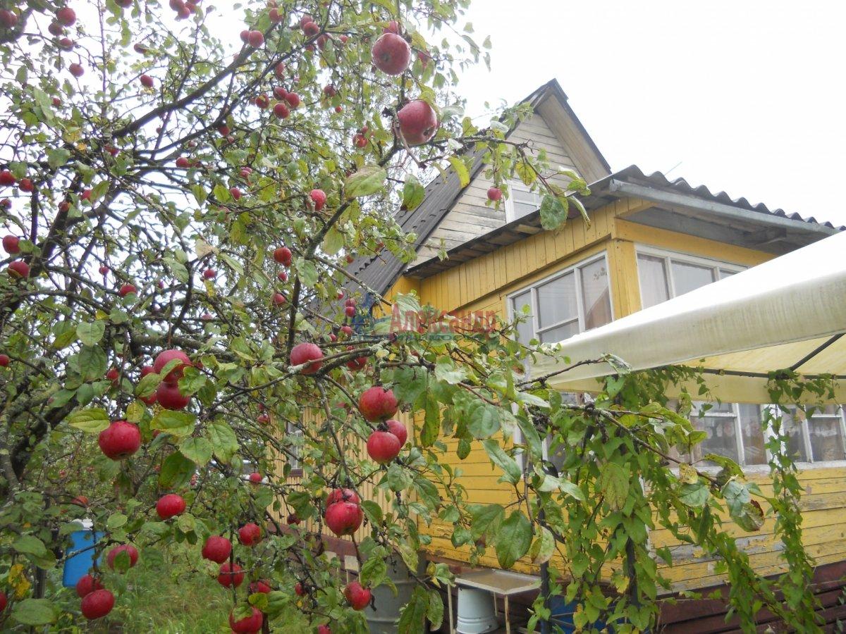 Садовый дом (40м2) на продажу — фото 3 из 12