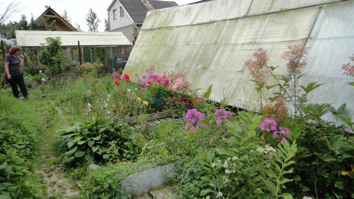 Садовый дом (55м2) на продажу — фото 10 из 24