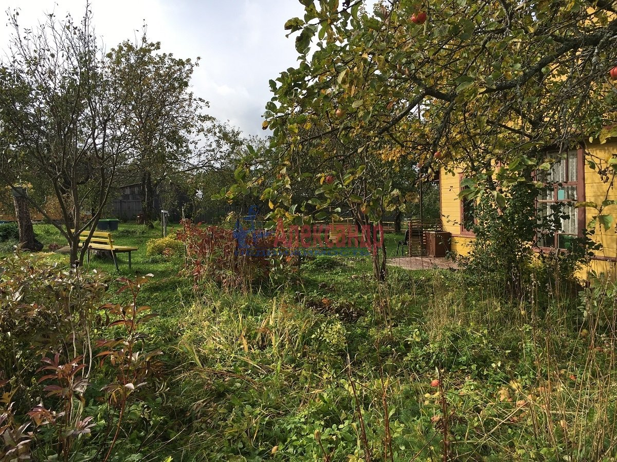Садовый дом (50м2) на продажу — фото 6 из 9