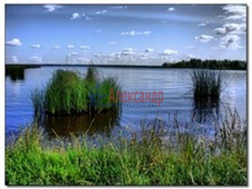 уютные границы водного заповедника в сестрорецке флакон